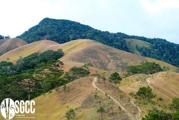 Đồi cỏ và rừng Tà Năng