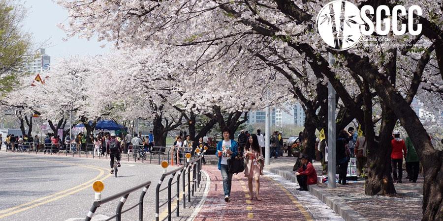 DU LỊCH Hàn Quốc Seoul – Nami - Everland