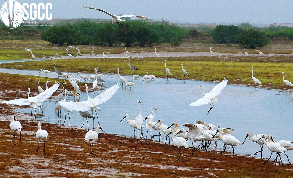 Vườn chim lớn nhất Việt Nam