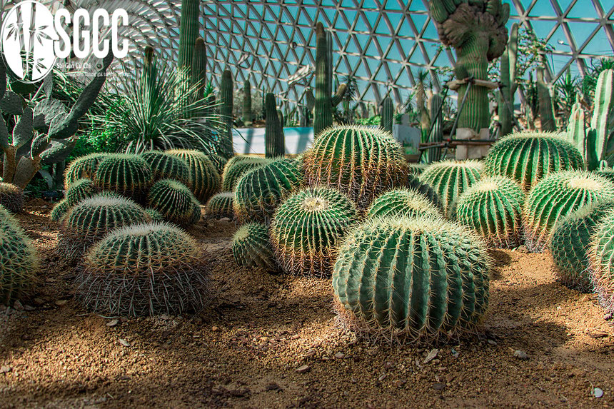 Vườn thực vật Cactus Garden