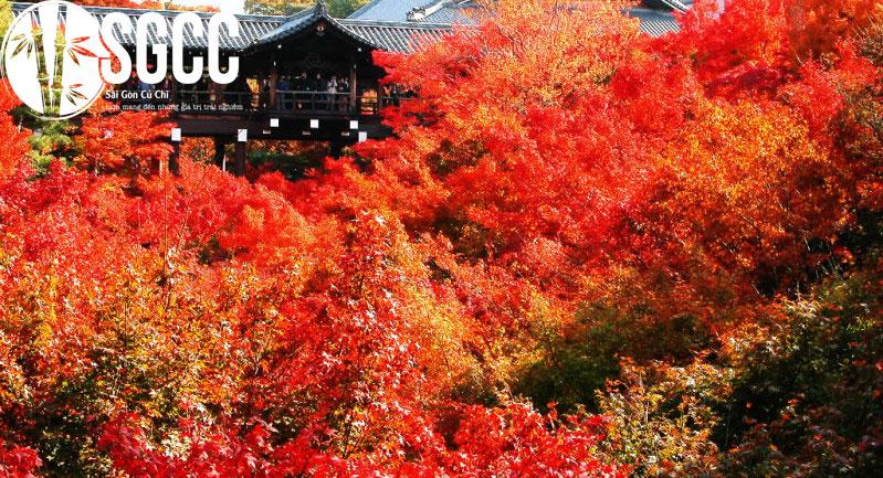 Khám phá mùa thu NHẬT BẢN