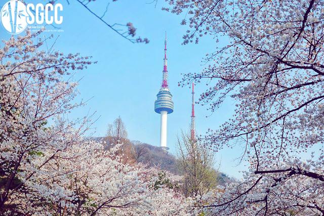 Khám phá mùa đông Hàn Quốc Seoul – Nami – Lotte World – Trượt Tuyết