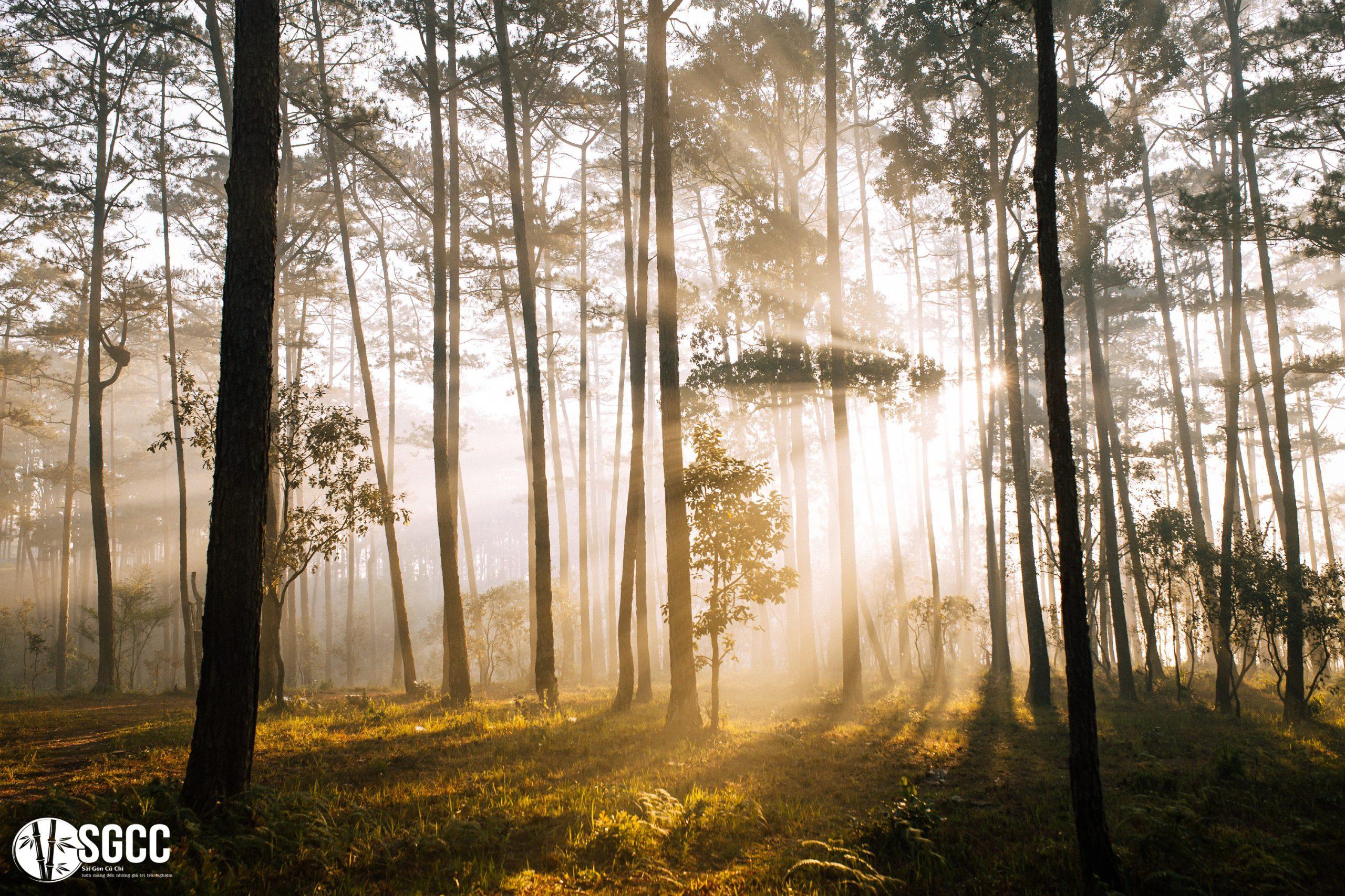 Hình ảnh đẹp ngất ngây buổi ban mai bên Hồ Tuyền Lâm