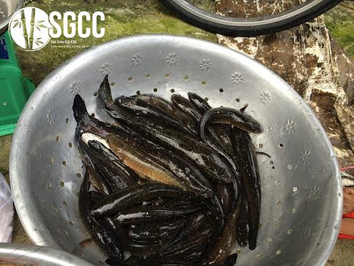 Cá lóc nướng chui tại Sài Gòn, món ăn đặc sản Miền Tây