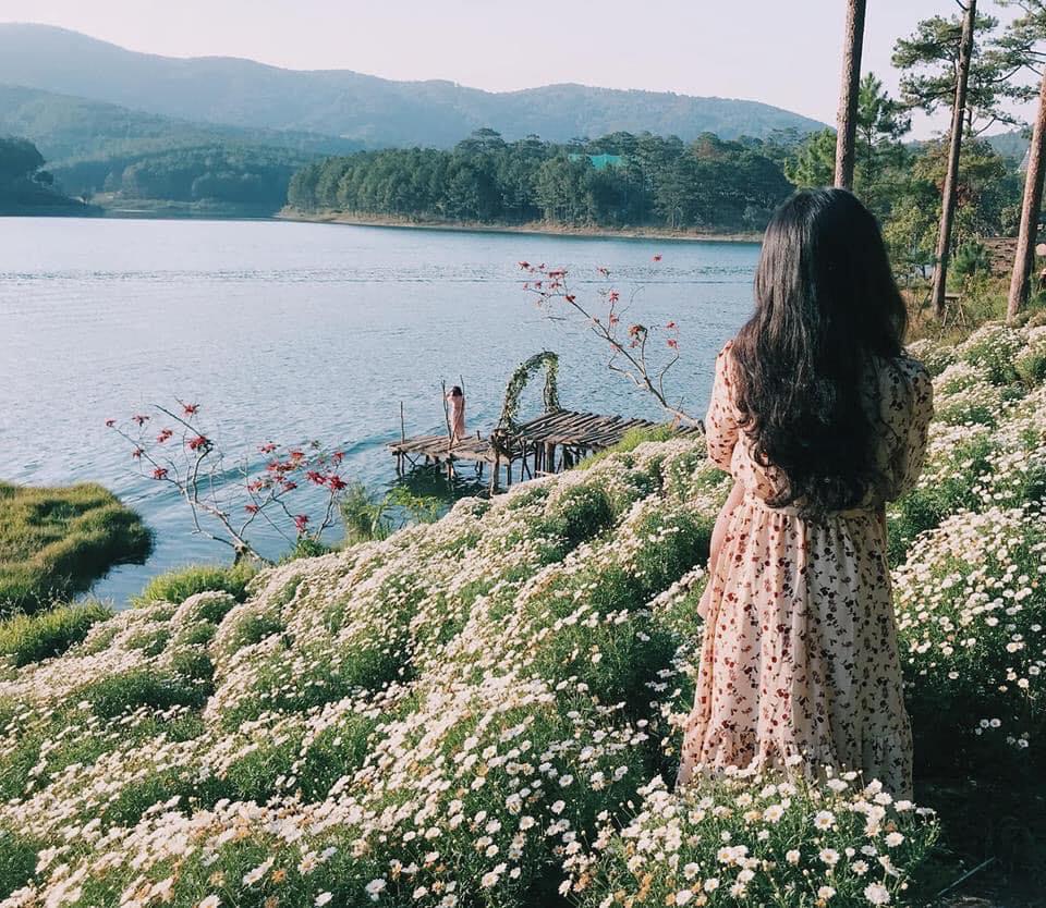 Khu vườn dâu, cúc họa mi hút giới trẻ ở Đà Lạt