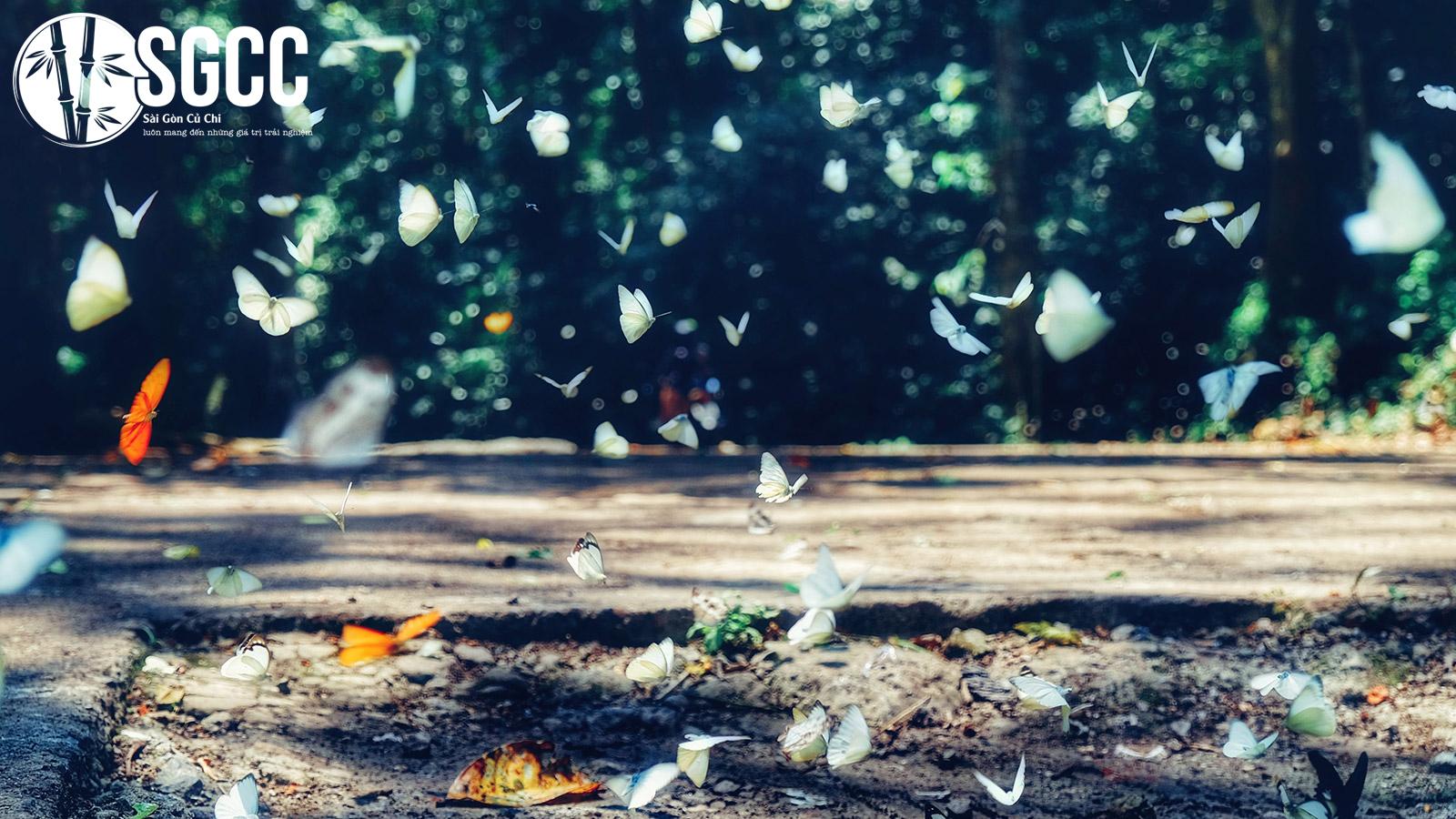 Đẹp ngỡ ngàng mùa bướm tại vườn quốc gia Cúc Phương