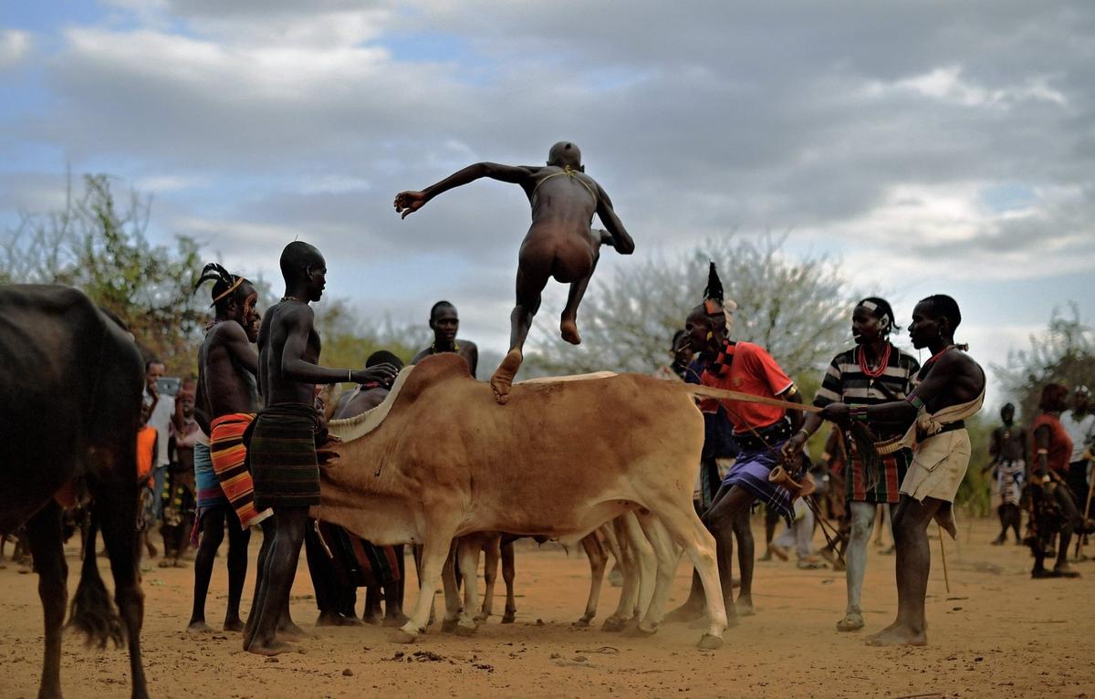 Nhảy bò đánh dấu tuổi trưởng thành
