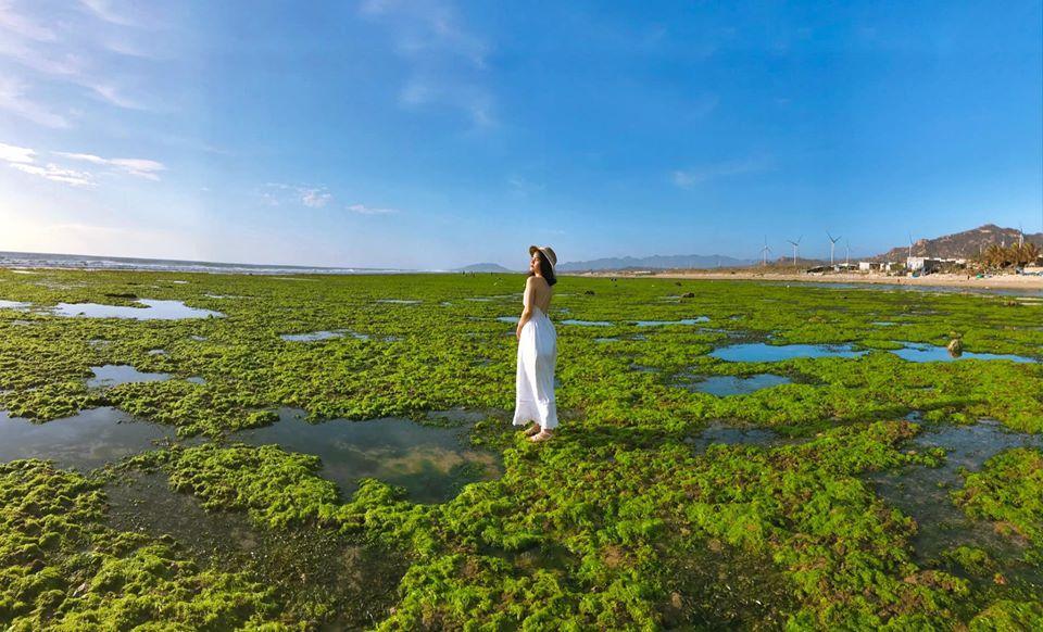 Hướng dẫn đường đi cánh đồng rong biển Ninh Thuận