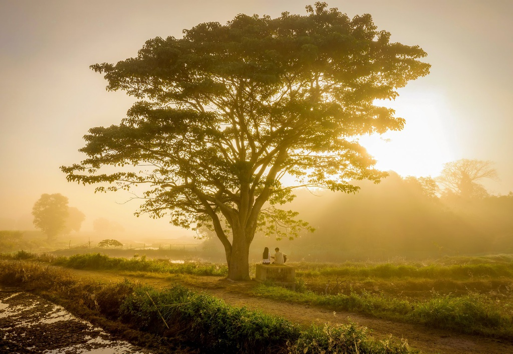 Làng quê yên bình xứ Huế có cây cô đơn mang tên Mắt Biếc