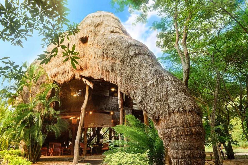 Nhà hình gấu, cá sấu và những thiết kế hình động vật trên thế giới