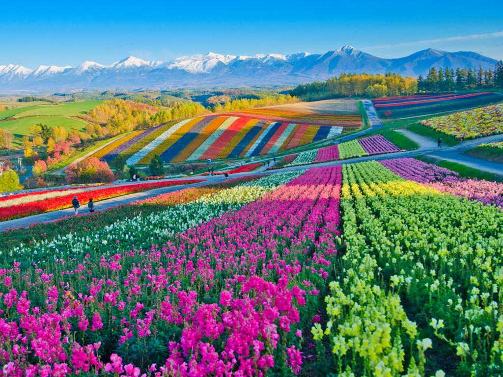 Những cánh đồng hoa rực rỡ thế giới