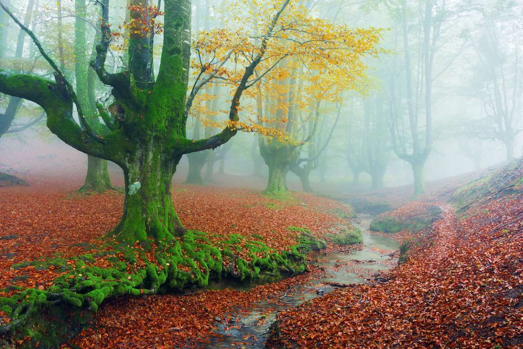 The forests tinged with fairytale fascinated visitors