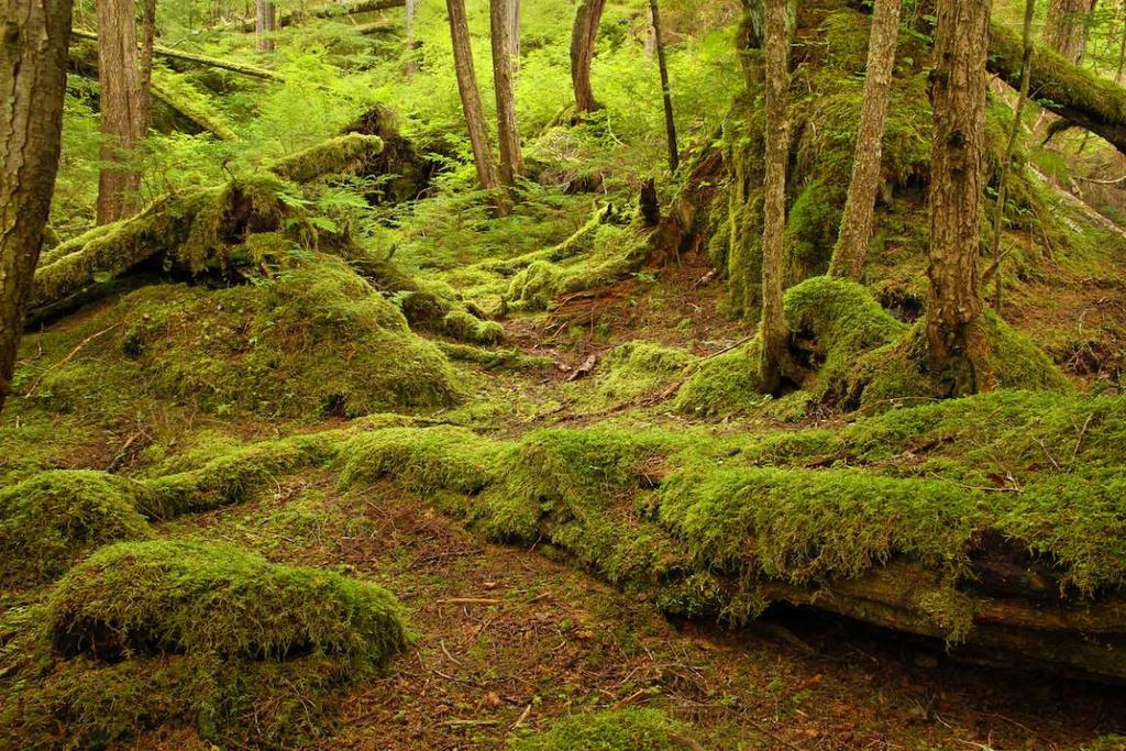 Những khu rừng nhuốm màu cổ tích mê hoặc du khách