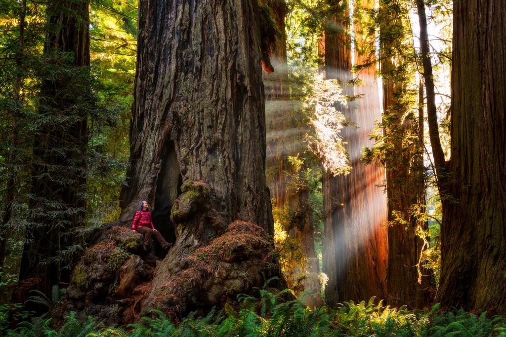 3 vườn quốc gia Mỹ sở hữu rừng cây gỗ đỏ cao nhất thế giới