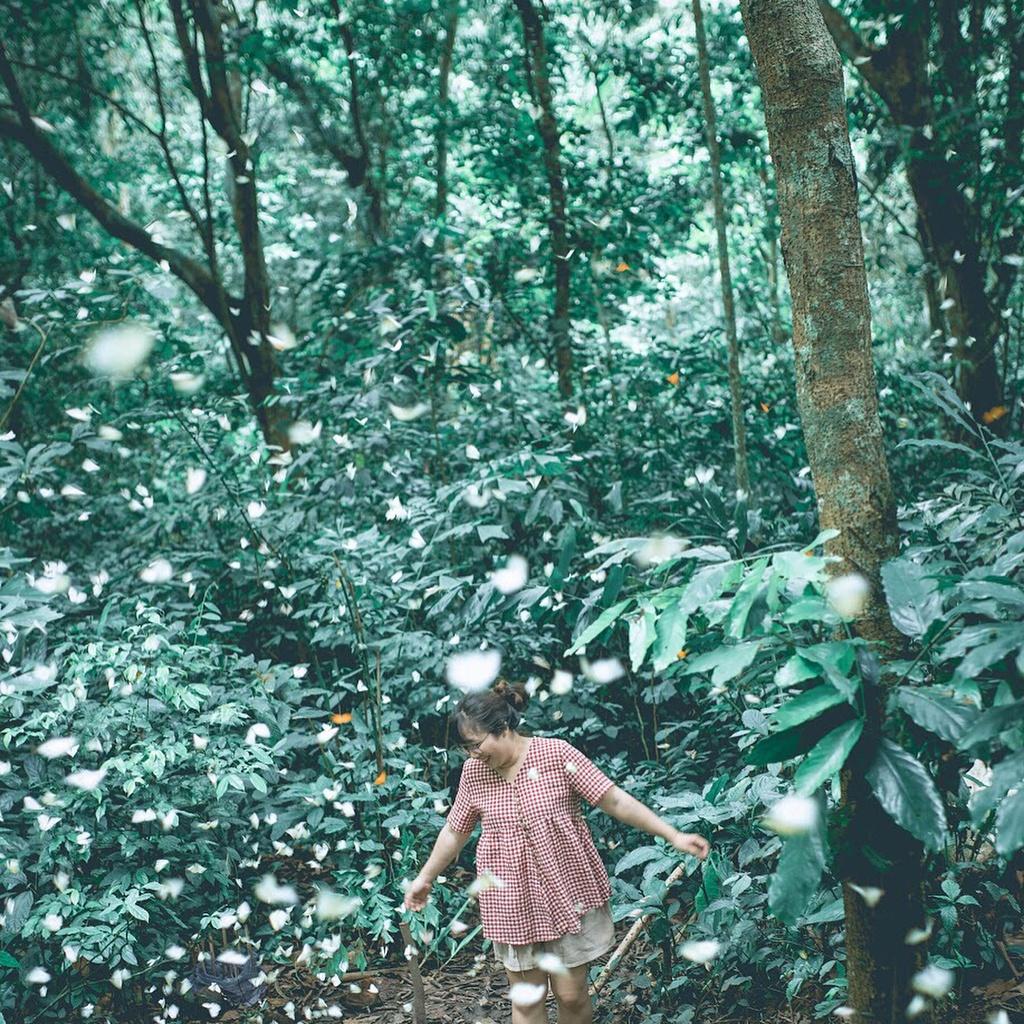 4 khu rừng nguyên sinh đẹp nổi tiếng ở Việt Nam