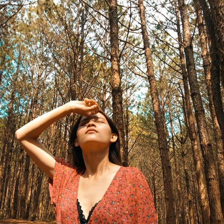 7 địa điểm chụp rừng thông đậm chất Đà Lạt