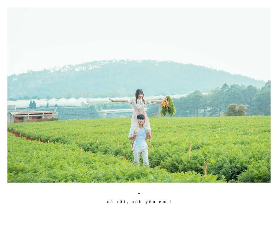 Xuất hiện vườn cà rốt đẹp tựa trong phim tại Đà Lạt