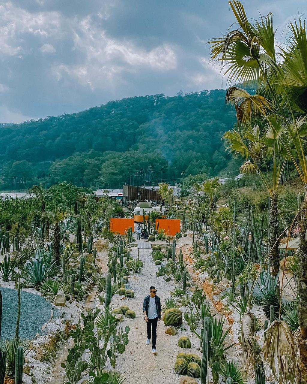 5 vườn xương rồng đẹp cho tín đồ yêu thiên nhiên