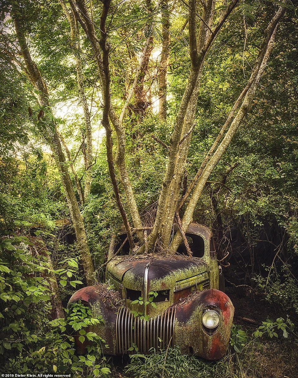 Xe cổ vứt trong rừng bị mẹ thiên nhiên nuốt trọn