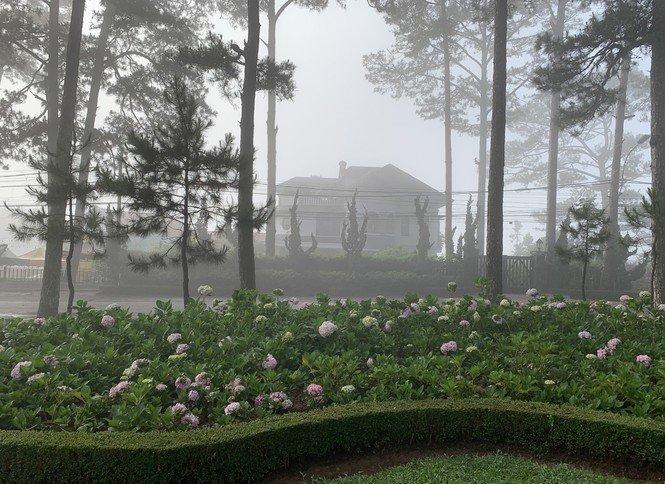 Bất ngờ Đà Lạt đẹp mê hoặc giữa 'biển sương', huyền ảo như chốn bồng lai