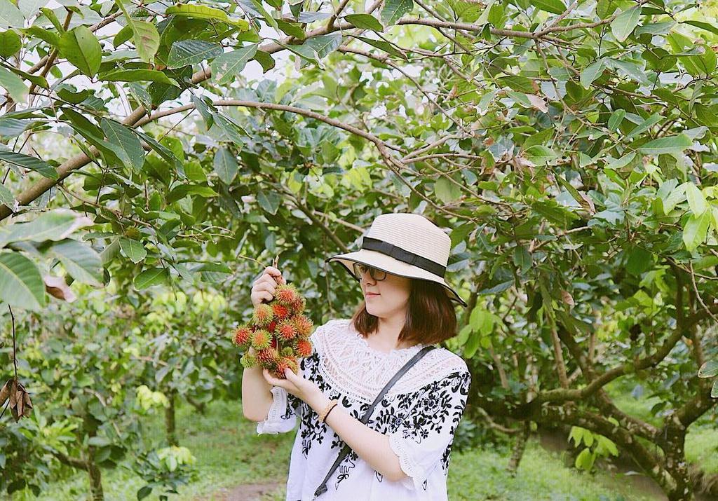 Ghé thăm 5 miệt vườn trái cây nổi tiếng ở miền Tây