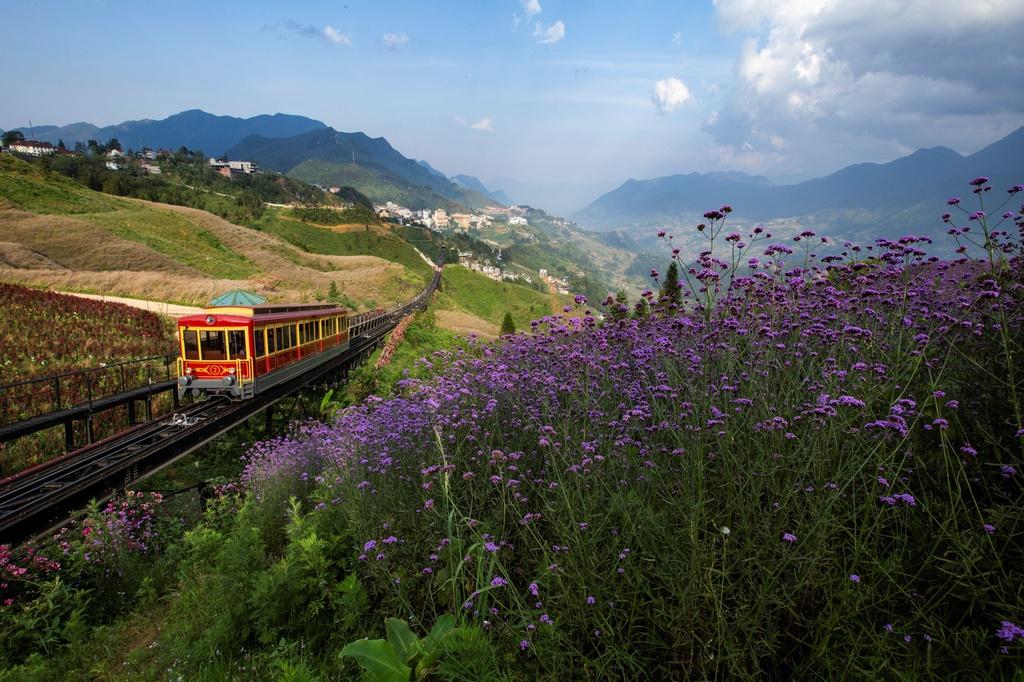 Lạc giữa thung lũng hoa lớn nhất Việt Nam ở Sa Pa