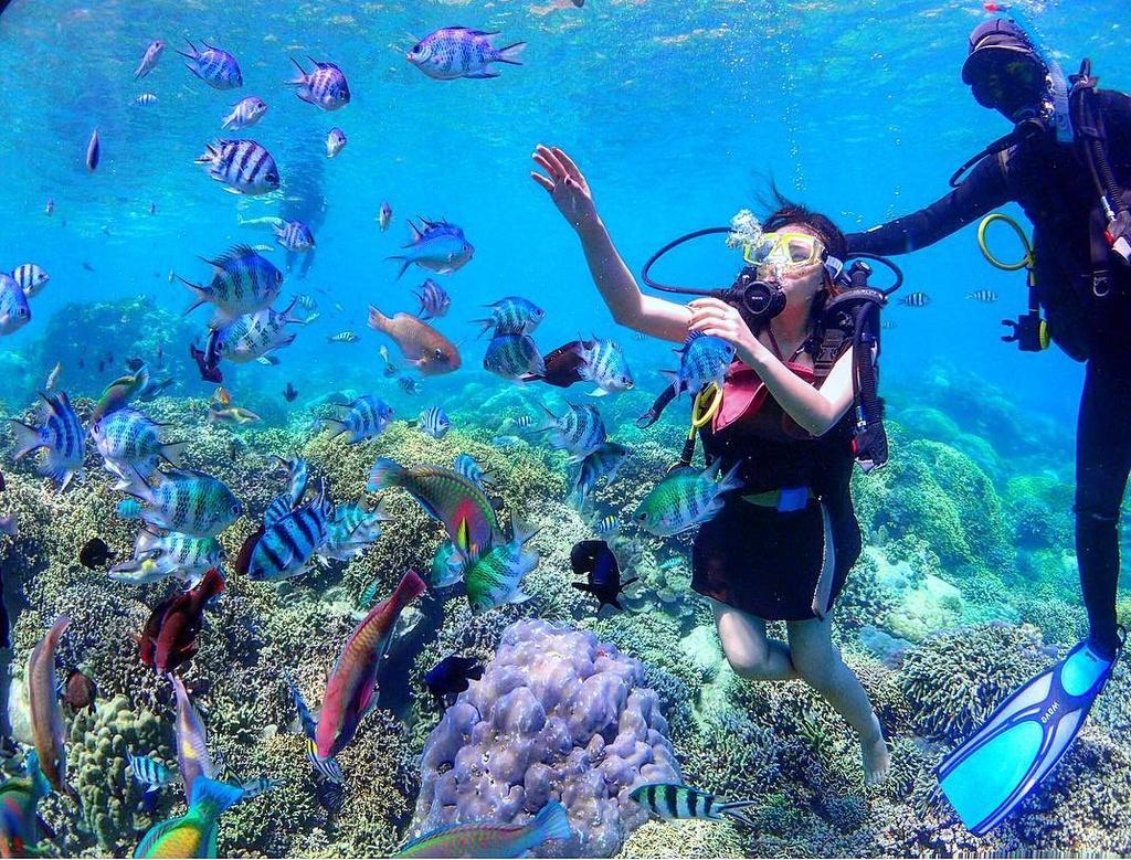 Nha Trang và các điểm lặn ngắm san hô hút du khách mùa hè