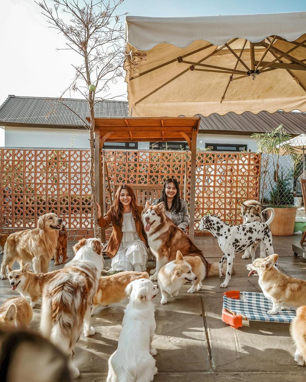 Những quán cà phê thú cưng thu hút giới trẻ check-in tại Đà Lạt