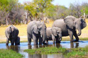 10 điểm du lịch ngắm các loài động thực vật lớn nhất Trái Đất
