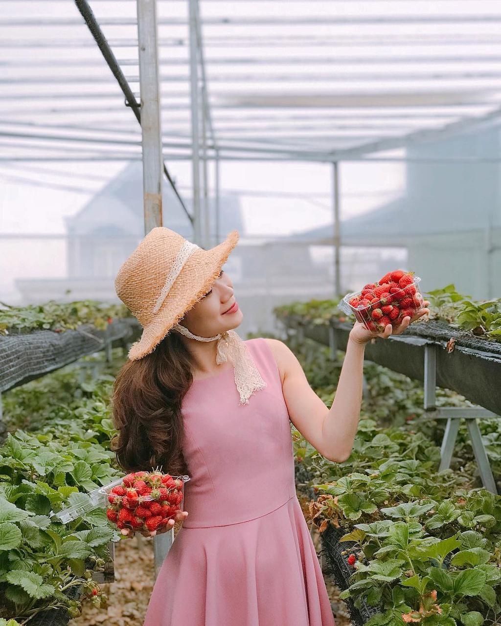 4 vườn dâu tây cho bạn check-in ở Đà Lạt