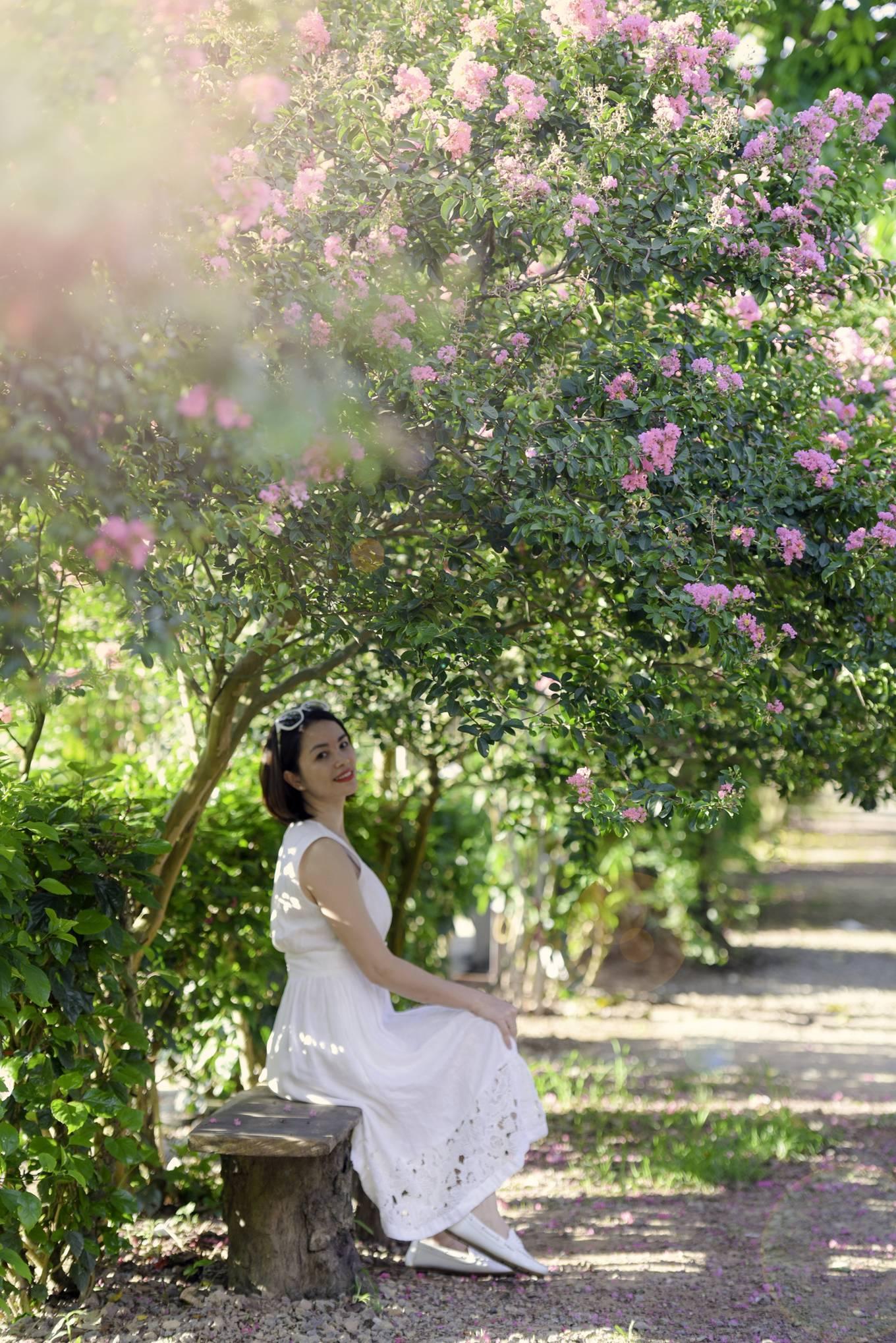 Đường hoa tường vi cổ tích ở Hà Nội