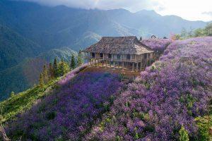 Hành trình du lịch Sa Pa mùa hoa nở không nên bỏ lỡ