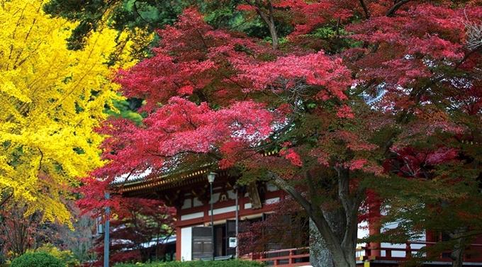 Hồ hoa cẩm tú cầu ở Osaka