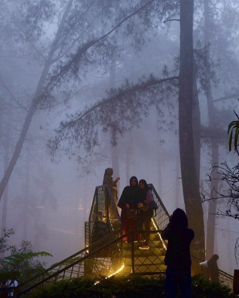 Khám phá rừng lan đẹp và ngoạn mục nhất Indonesia