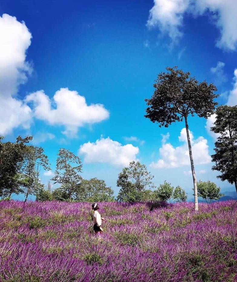 Khám phá thung lũng hoa trên đèo Pha Đin