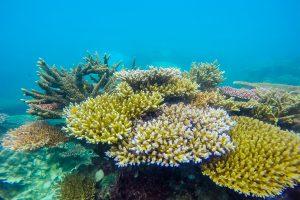 Cột san hô khổng lồ ở Côn Đảo