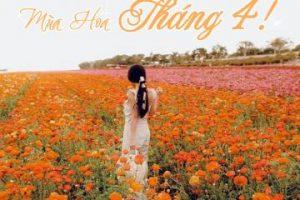 Đẹp đến 'nghẹt thở' những mùa hoa tháng 4 rực rỡ trên khắp thế giới